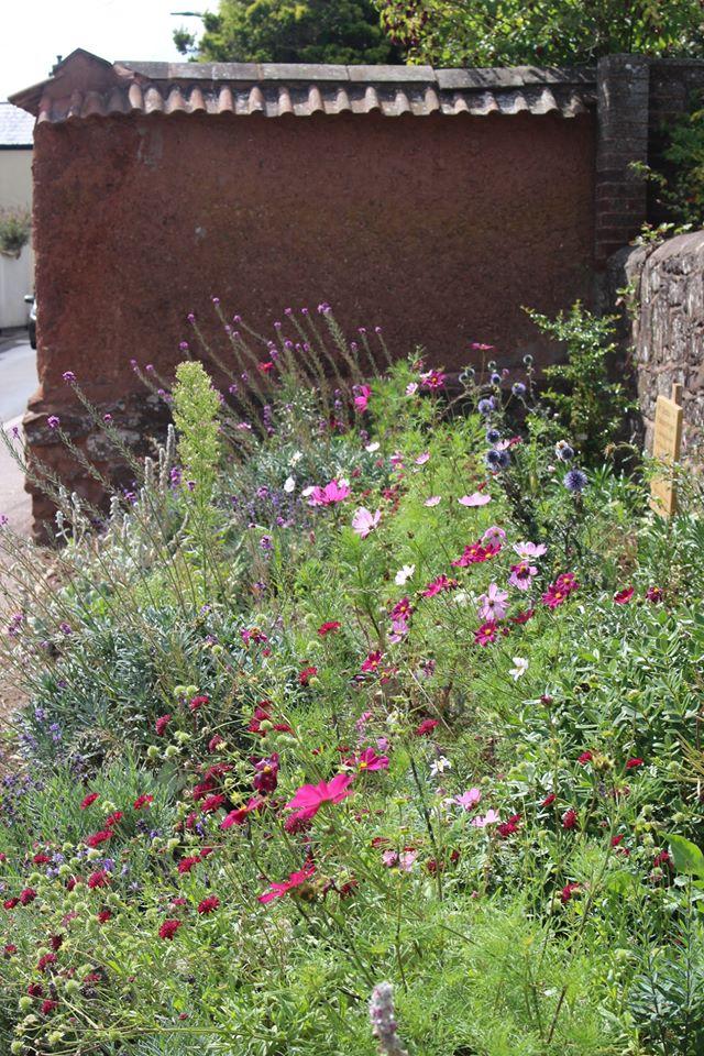 Wildflowers in a small roadside community garden